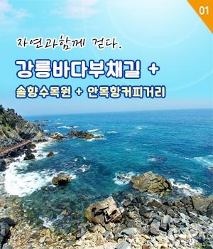 강릉 최고의 당일여행을 떠나자~! 강릉바다부채길+안목항 커피거리+솔향수목원